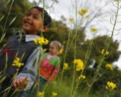 Kids walking through flowery meadow