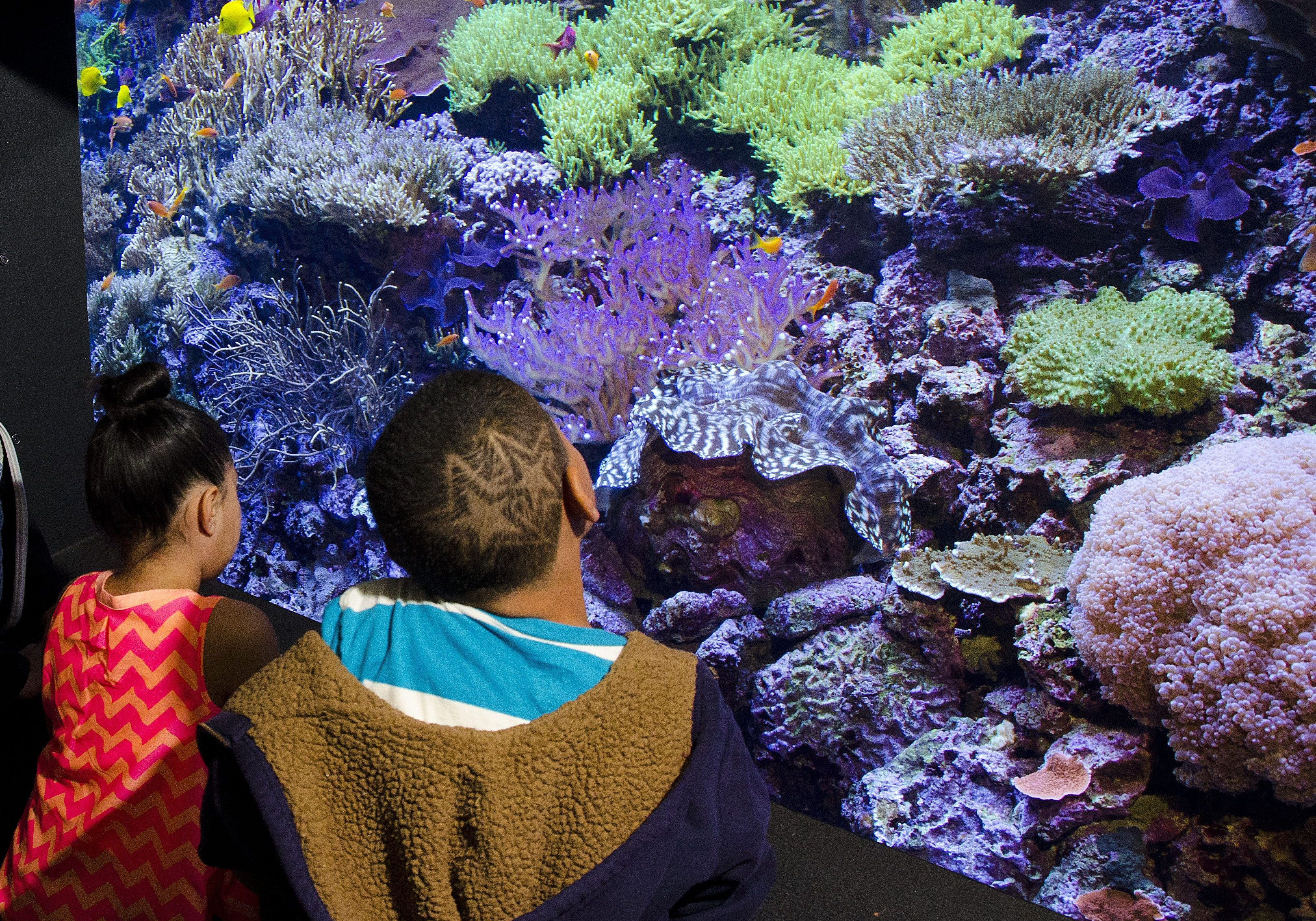 Guests discovering the coral reef at Seattle Aquarium